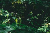 close-up shot of green branches in forest