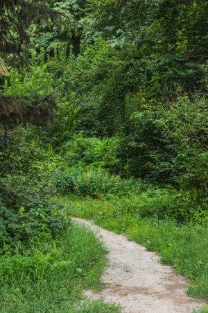 Scenic tourné rural sentier de forêt verte