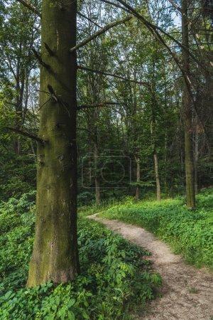 dramatique coup voie rurale de forêt verte
