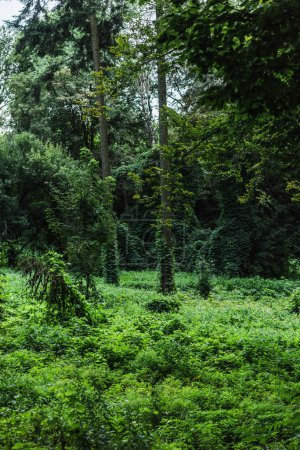 scenic shot of forest with ground covered with green vine
