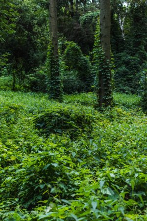 dramatic shot of forest with ground covered with green vine