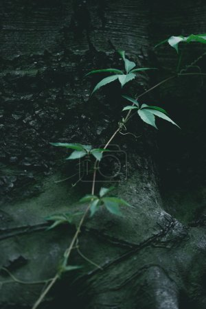 close-up shot of green vine growing on tree trunk