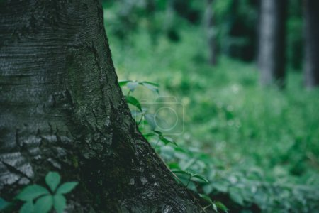 Photo for Close-up shot of tree trunk with green meadow on background - Royalty Free Image