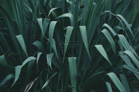 full frame shot of green bush for background