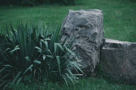 decorative bush and rocks on meadow in botanical garden