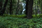 """Постер, картина, фотообои """"драматические выстрел красивые леса с землей, покрытые листьями"""""""