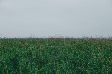 green field and grey sky in autumn