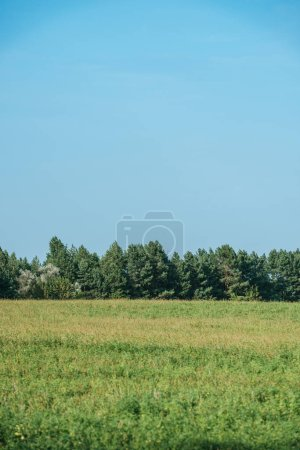 green plants on field, forest and clear sky in autumn