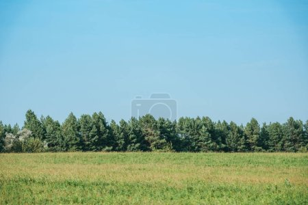 green field, forest and blue sky at countryside