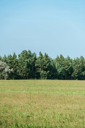 Photo for Green field, trees and clear blue sky in autumn - Royalty Free Image