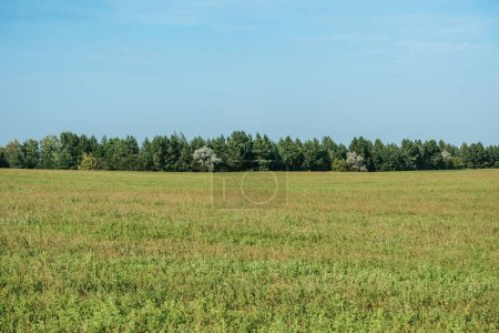 Photo for Green field, forest and blue sky in autumn - Royalty Free Image
