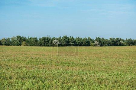 champ vert, forêt et ciel bleu à l'automne