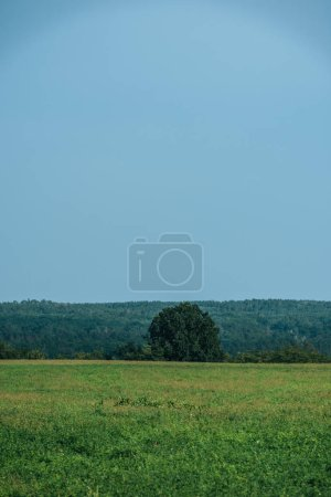 green grass, forest and clear sky in autumn
