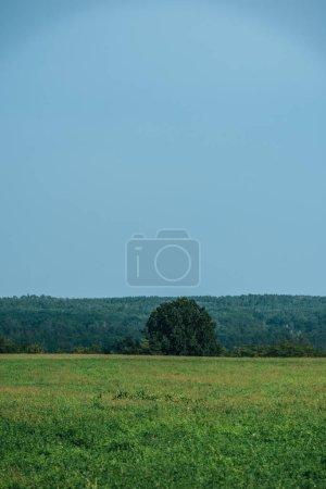 herbe verte, forêt et ciel clair en automne