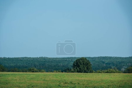 Photo for Green field, forest and clear sky in autumn - Royalty Free Image