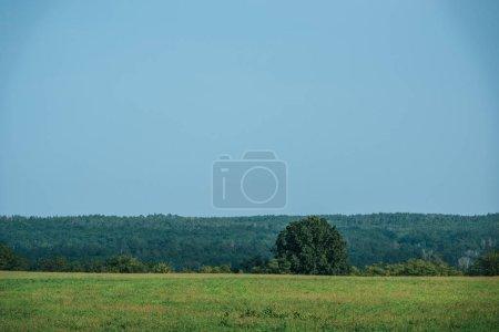 champ vert, forêt et ciel clair en automne