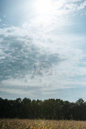 Photo pour Champ automnal, forêt et ciel nuageux bleu avec lumière du soleil - image libre de droit