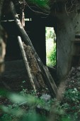 selective focus of abandoned old building and green leaves