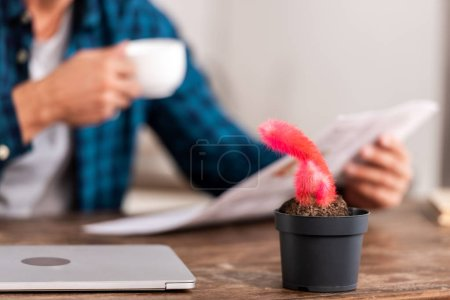 selective focus of pink acalypha hispida in pot and laptop with man reading newspaper behind at table