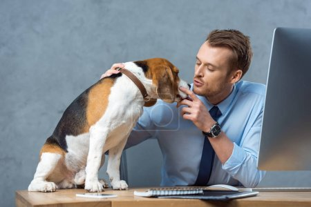 Photo for Cheerful businessman playing with adorable beagle at table in modern office - Royalty Free Image