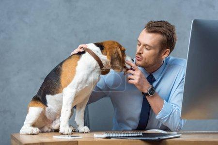 Foto de Empresario alegre jugando con adorable beagle en mesa de oficina moderna - Imagen libre de derechos