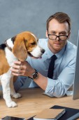 young businessman in eyeglasses playing with cute beagle at table in modern office