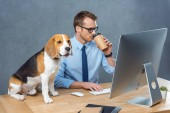 handsome young businessman in eyeglasses drinking coffee and working on computer while beagle sitting on table in office