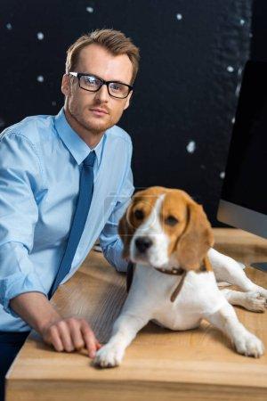 Photo pour Mise au point sélective d'homme d'affaires en lunettes assis à table avec beagle dans le bureau moderne - image libre de droit