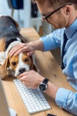 partial view of businessman playing with adorable beagle at table in modern office