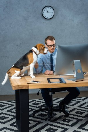 Photo for High angle view of handsome businessman in eyeglasses working on computer while dog sitting near at table in office - Royalty Free Image
