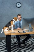 high angle view of handsome businessman in eyeglasses working on computer while dog sitting near at table in office