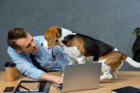 Photo for Young businessman working on laptop and beagle sitting near on table in modern office - Royalty Free Image