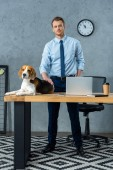 cute beagle sitting on table with laptop and smartphone while businessman standing near in modern office