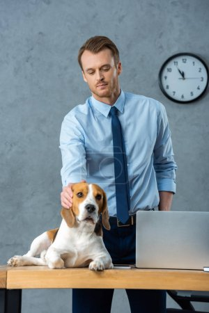 Photo for Handsome businessman touching beagle at table with laptop in modern office - Royalty Free Image