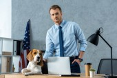 young businessman touching beagle at table with laptop and disposable coffee cup in modern office