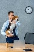 handsome businessman holding beagle near table with smartphone and laptop in modern office