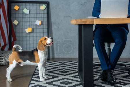 Photo for Cropped image of businessman working at table with laptop while beagle standing near in modern office - Royalty Free Image
