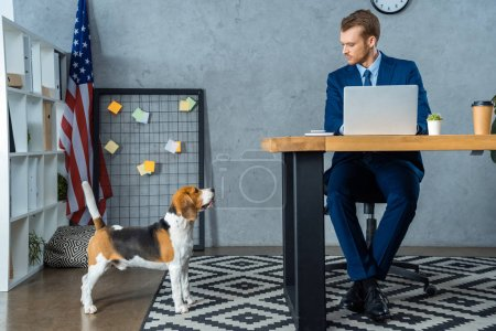 Photo for Confident businessman working at table with laptop while beagle standing near in modern office - Royalty Free Image