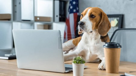 Photo for Selective focus of beagle sitting on table with disposable coffee cup and laptop in modern office - Royalty Free Image