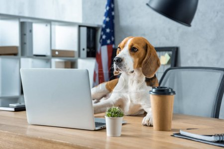 Photo for Adorable beagle sitting on table with disposable coffee cup and laptop in modern office - Royalty Free Image