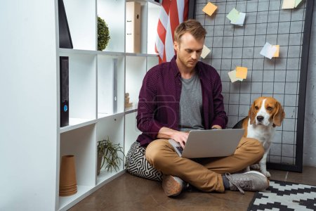 Photo for Focused male freelancer working on laptop while beagle sitting near usa flag in home office - Royalty Free Image