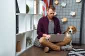 focused male freelancer working on laptop while beagle sitting near usa flag in home office