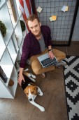 high angle view of male freelancer with laptop touching beagle near usa flag in home office