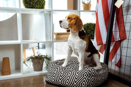 Photo for Beagle sitting on bean bag near american flag in modern office - Royalty Free Image