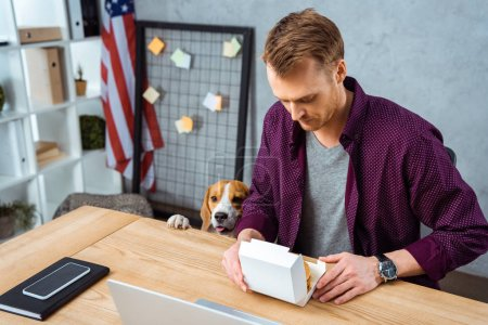 Photo for Selective focus of businessman eating burger at table with laptop and smartphone while beagle standing near in office - Royalty Free Image