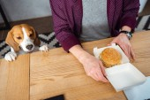cropped image of businessman having lunch with burger while beagle standing near at table in office