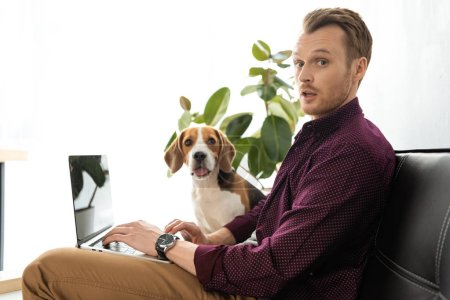 Photo for Surprised male freelancer working on laptop while beagle sitting near on sofa at home office - Royalty Free Image