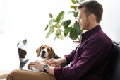 male freelancer working on laptop while beagle sitting near on sofa at home office