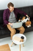 high angle view of male freelancer sitting on sofa with laptop and adorable beagle at home