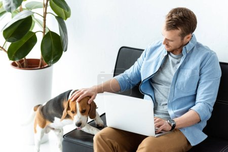 Photo for High angle view of male freelancer with laptop touching beagle on sofa at home office - Royalty Free Image